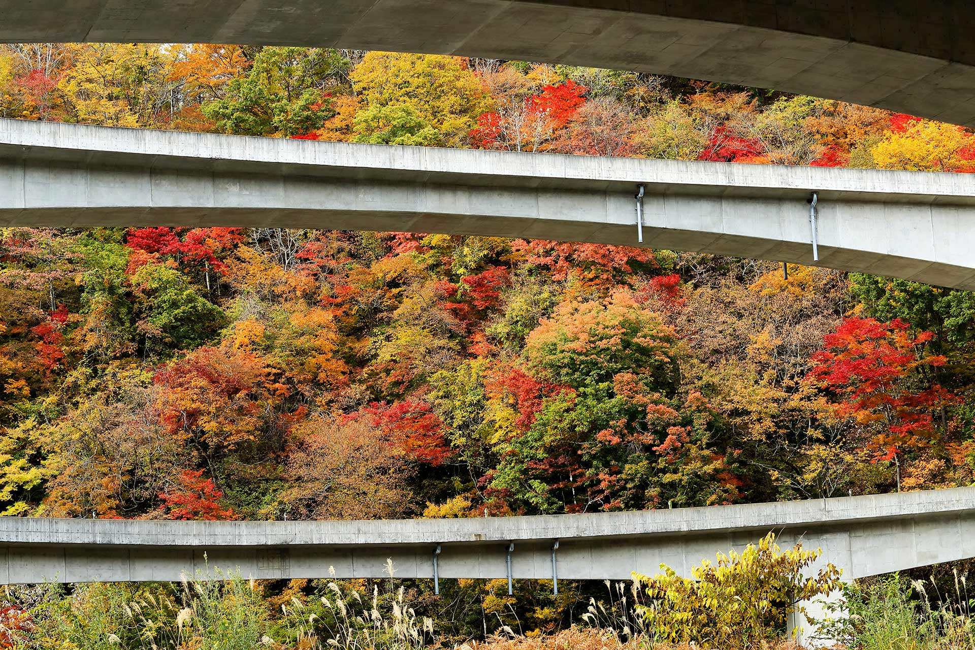 Viaducts crossing the Japanese forest